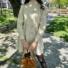 Kép 1/3 - Aspen hosszú ujjú ruha fodorral - bézs